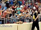 www.bihon.ro - CSM Oradea prezinta trofeul suporterilor