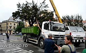 www.bihon.ro - Tisele din Piata Ferdinand sunt mutate