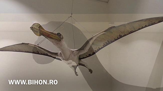 "www.bihon.ro - Expozitia ""Ultimii dinozauri din Transilvania"", la Oradea"